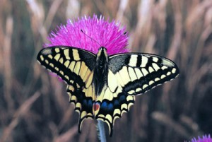 MACHAON_PARS.tif